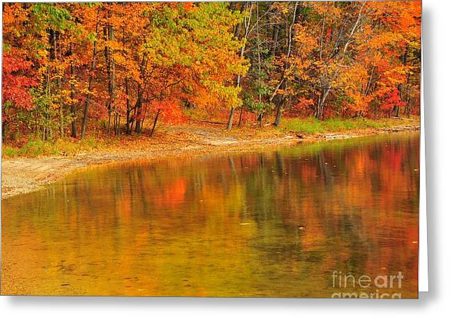 Autumn Forest Reflection Greeting Card by Terri Gostola