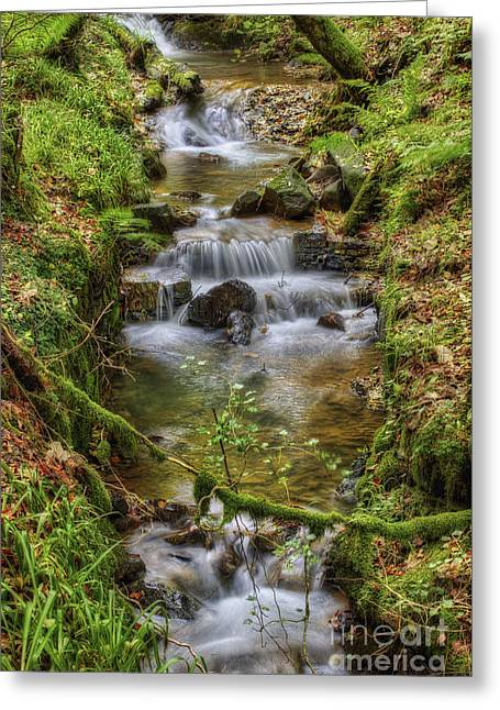 Autumn Forest Stream V2 Greeting Card by Ian Mitchell