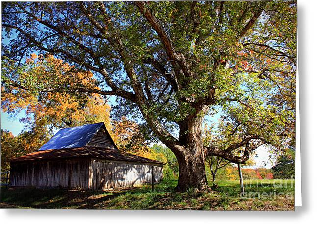 Red Roofed Barn Greeting Cards - Autumn Friends Greeting Card by Reid Callaway