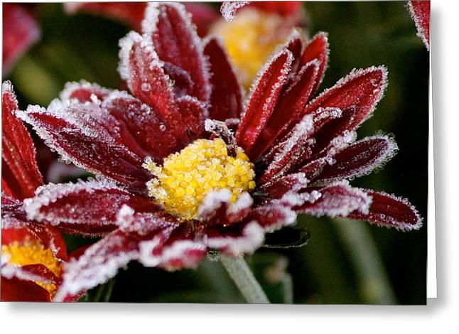 Autumn Frost Greeting Card by Tiffany Erdman