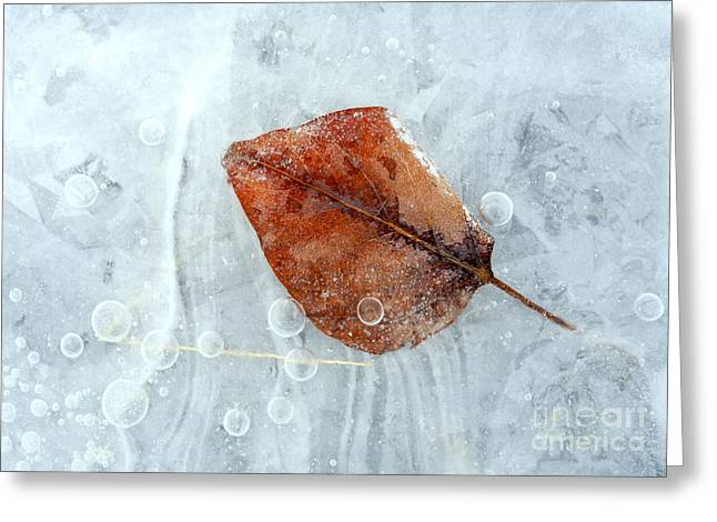 Ice Greeting Cards - Autumn Frozen Greeting Card by Mike  Dawson