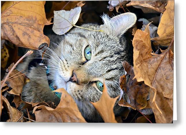 Susan Leggett Photographs Greeting Cards - Autumn Fun Greeting Card by Susan Leggett