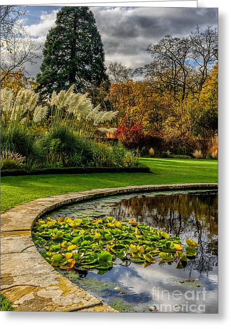 Acer Greeting Cards - Autumn Garden Greeting Card by Adrian Evans