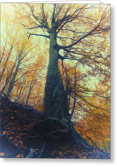 Autumn Photography Greeting Cards - Autumn Greeting Card by Giovanni Chianese