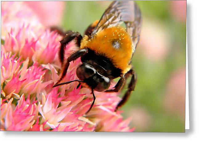 Patterned Marking Greeting Cards - Autumn Glory and Bumblebee Greeting Card by Chris Berry