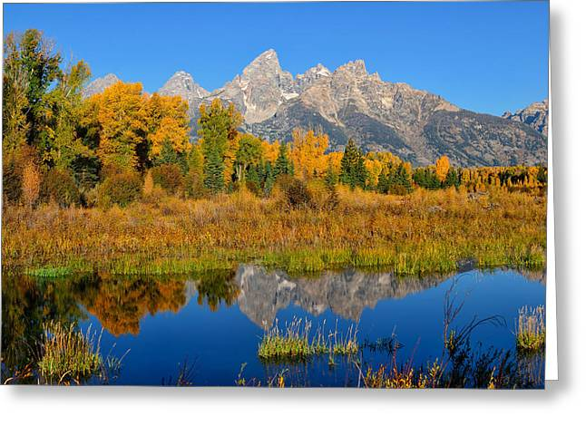 Tetons Greeting Cards - Autumn Glory in the Tetons Greeting Card by Greg Norrell