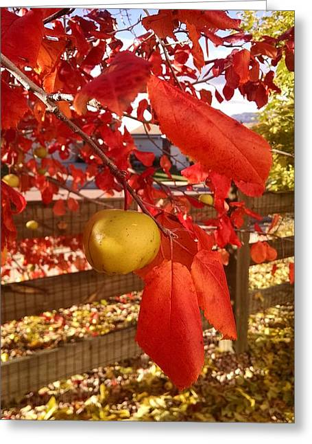 Photographs With Red. Greeting Cards - Autumn Glory Greeting Card by Jennifer Forsyth