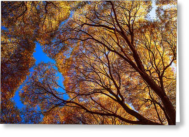 Fall Trees Greeting Cards - Autumn Glory Greeting Card by Jenny Rainbow