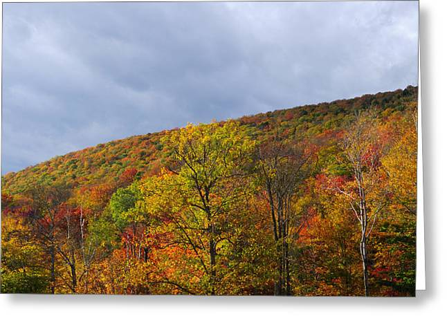 Foliage In White Mountains Greeting Cards - Autumn Glory Greeting Card by Luke Moore