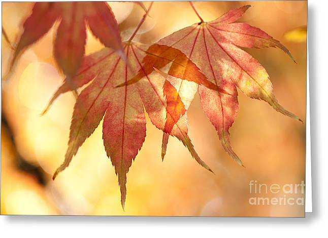 Warm Tones Greeting Cards - Autumn Glow Greeting Card by Anne Gilbert