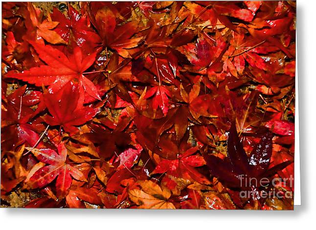 Shades Of Red Greeting Cards - Autumn Glow by Kaye Menner Greeting Card by Kaye Menner