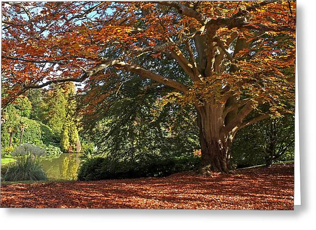 Colourful Bark Greeting Cards - Autumn Glow Greeting Card by Gill Billington