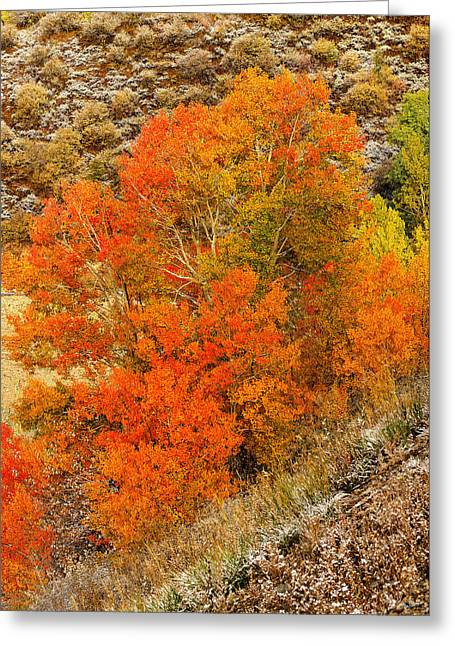 Cards Greeting Cards - Autumn Glow Greeting Card by Greg Norrell