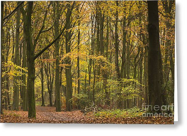 Autumn Gold Greeting Card by Anne Gilbert
