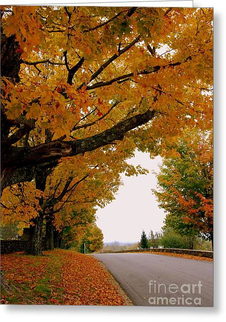 Leaf Peepers Greeting Cards - Autumn Gold Greeting Card by Eunice Miller
