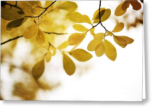 Flora Greeting Cards - Autumn Gold Greeting Card by Priska Wettstein