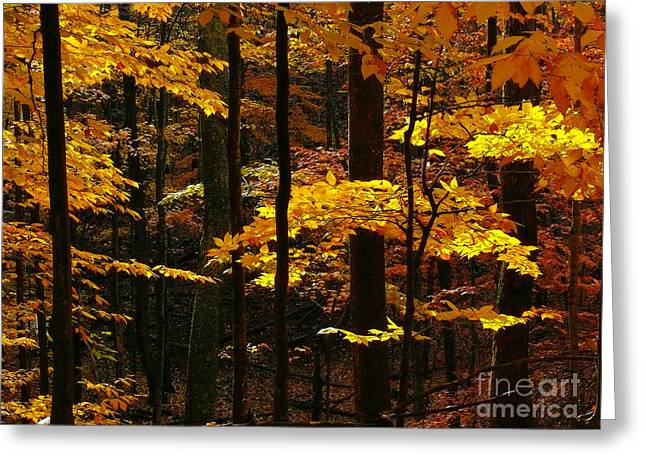 Sink Hole Greeting Cards - Autumn Gold Greeting Card by TAPS Photography