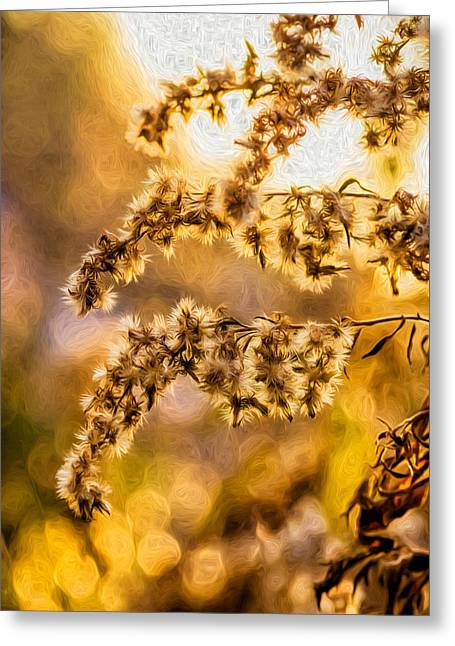 Backlit Prints Greeting Cards - Autumn Goldenrod - Paint  Greeting Card by Steve Harrington