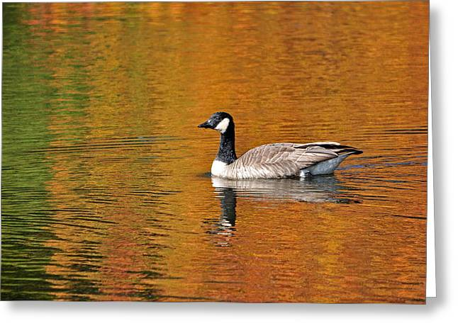 Ladnscape Greeting Cards - Autumn Goose Greeting Card by Patrick Friery