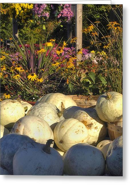 Harvest Deco Photographs Greeting Cards - Autumn Gourds Greeting Card by Joann Vitali