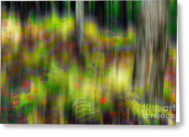 Surreal Landscape Photographs Greeting Cards - Autumn Grace - a Tranquil Moments Landscape Greeting Card by Dan Carmichael