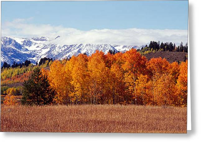 Tree Lines Greeting Cards - Autumn Grand Teton National Park Wy Greeting Card by Panoramic Images
