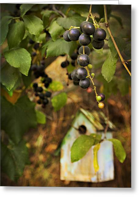 Purple Grapes Photographs Greeting Cards - AUTUMN GRAPES with BIRDHOUSE Greeting Card by Theresa Tahara