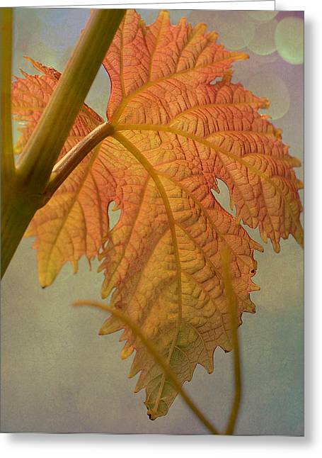 Autumn Grapevine Greeting Card by Fraida Gutovich