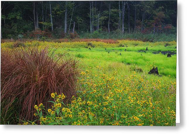 The Swamp Greeting Cards - Autumn Grass Greeting Card by Bill  Wakeley