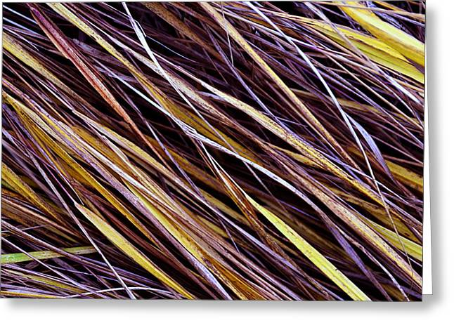 Healthy Greeting Cards - Autumn Grass Greeting Card by Jozef Jankola