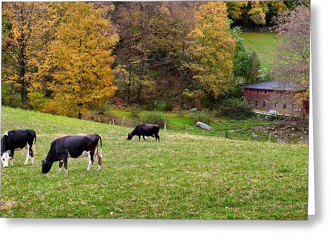 Old Country Roads Greeting Cards - Autumn Graze Greeting Card by Bill  Wakeley