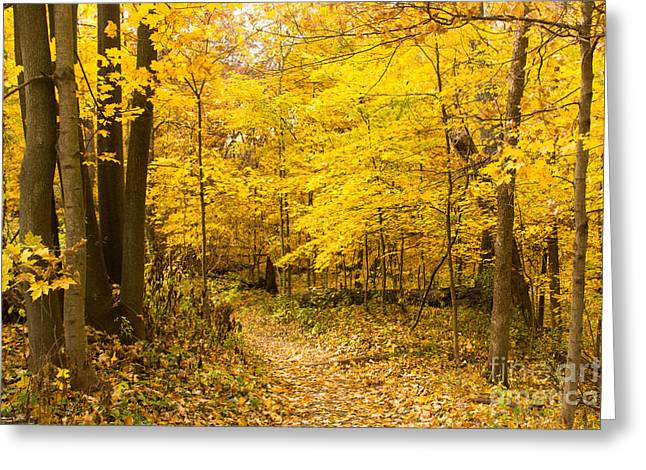 Indiana Autumn Greeting Cards - Autumn Greetings Greeting Card by Lynne Dohner