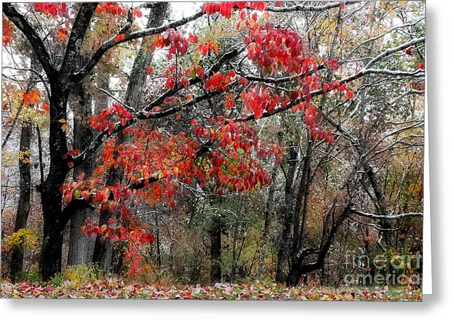 Late Fall Greeting Cards - Autumn Harmony Greeting Card by Michael Eingle