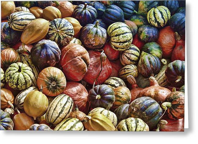 Spaghetti Greeting Cards - Autumn Harvest Greeting Card by Daniel Hagerman