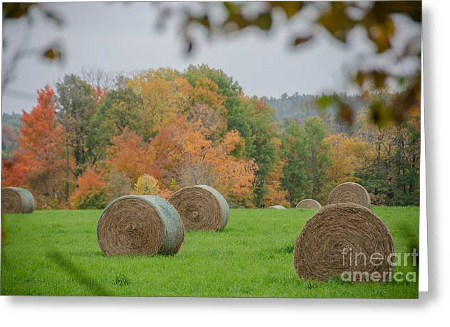 Peaceful Scene Greeting Cards - Autumn Hay Harvest Greeting Card by Cheryl Baxter