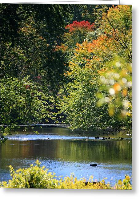 Landscape Photos Greeting Cards - Autumn Highlights on the Quinnebaug River Greeting Card by Neal  Eslinger
