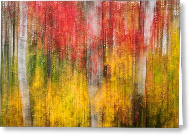 Groton Greeting Cards - Autumn Impression Greeting Card by Michael Blanchette
