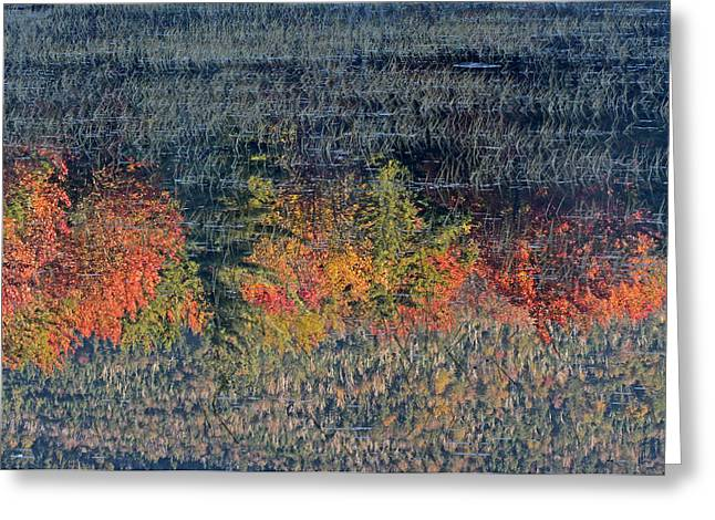 Forest Picture Greeting Cards - Autumn Impressionism Greeting Card by Juergen Roth