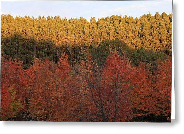 Autumn In Arcadia Greeting Card by Sheryl Burns