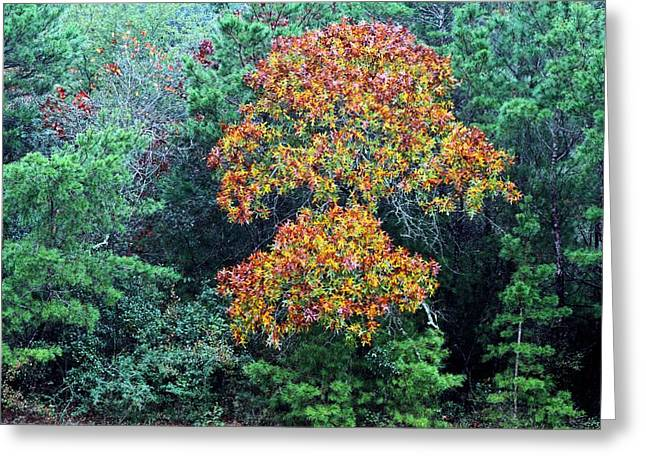 Forida Greeting Cards - Autumn in Florida Greeting Card by JC Findley