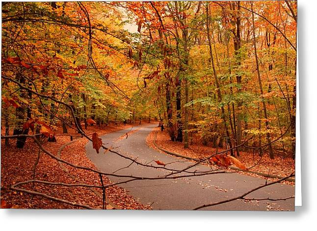 Scenic Drive Greeting Cards - Autumn In Holmdel Park Greeting Card by Angie Tirado