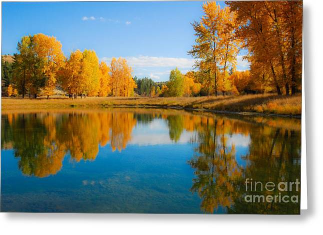 Trees Reflecting In Water Greeting Cards - Autumn in Montana Greeting Card by Kinsey Barnard