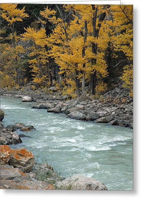 Gallatin River Greeting Cards - Autumn in Montanas Gallatin Canyon Greeting Card by Bruce Gourley