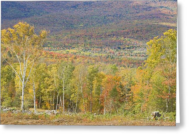 Maine Landscape Greeting Cards - Autumn In Mount Blue State Park Weld Maine Greeting Card by Keith Webber Jr