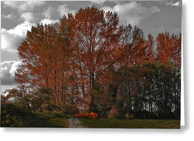 Mount Vernon Greeting Cards - Autumn in Mt Vernon Greeting Card by David Patterson