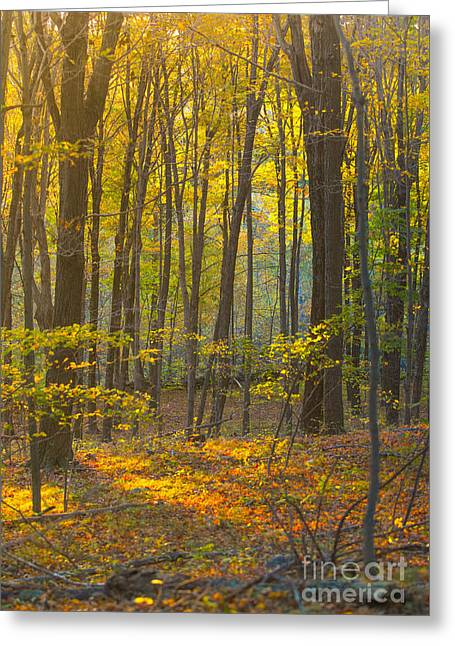 New England Morning Greeting Cards - Autumn in New England Greeting Card by Diane Diederich