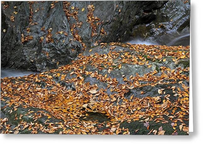 """autumn Foliage New England"" Greeting Cards - Autumn in New England  Greeting Card by Juergen Roth"