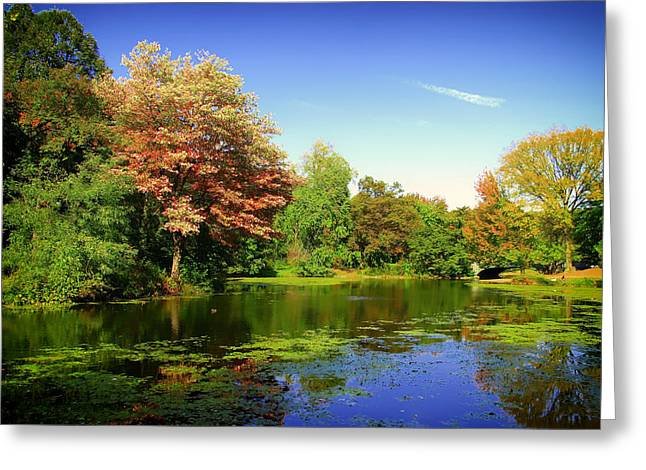 Prospects Greeting Cards - Autumn in Prospect Park - Brooklyn Greeting Card by Mountain Dreams