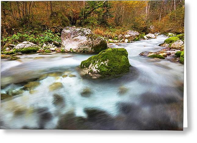 Bistrica Greeting Cards - Autumn in Slovenia Greeting Card by Nejc Urankar