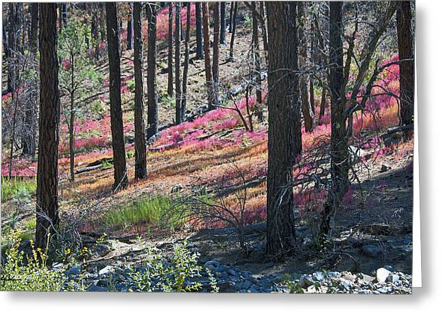 Prescott Digital Greeting Cards - Autumn in the Bradshaw Mountains 2 Greeting Card by Phil Balcastro